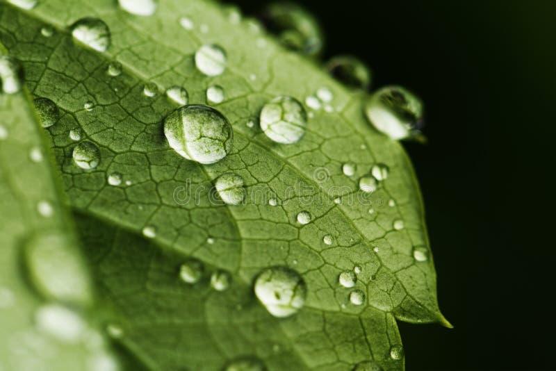 Lame verte avec des gouttes de l'eau photographie stock