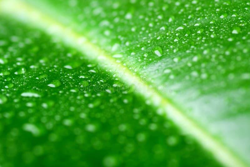 Lame verte avec des waterdrops photographie stock libre de droits