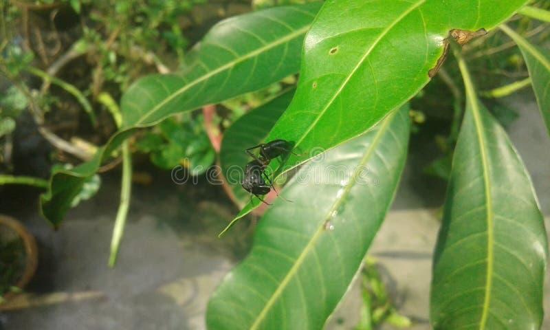 lame verte de fourmi photographie stock libre de droits