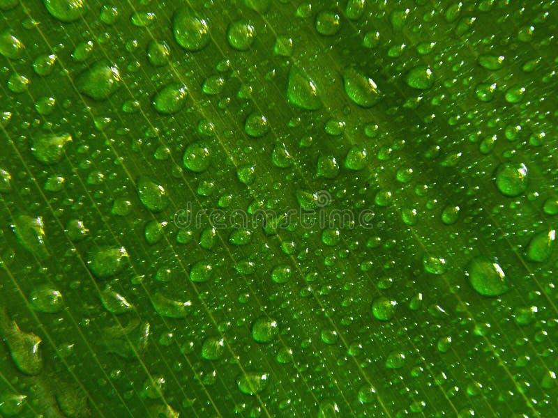 Lame verte de gouttelettes d'eau photographie stock libre de droits