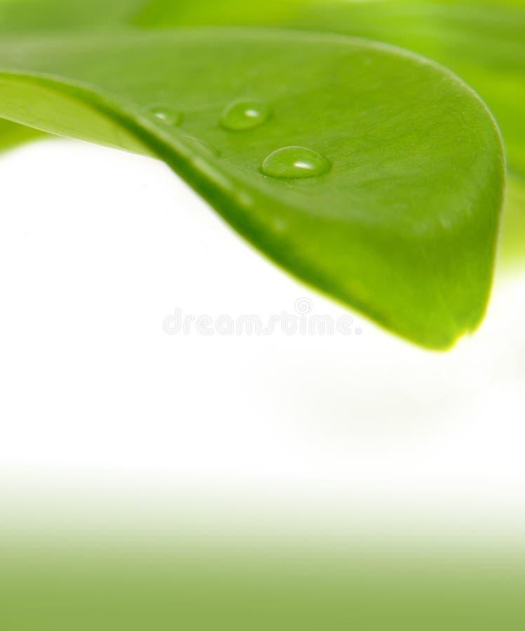 Lame verte et une goutte de pluie image stock