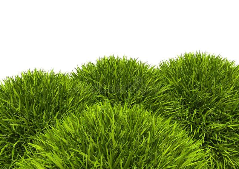 Lame verte fraîche de colline d'herbe d'isolement sur le fond blanc illustration libre de droits