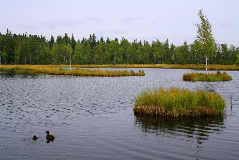 Lamelle de Chalupska, tourbe-marais dans la République Tchèque photographie stock libre de droits