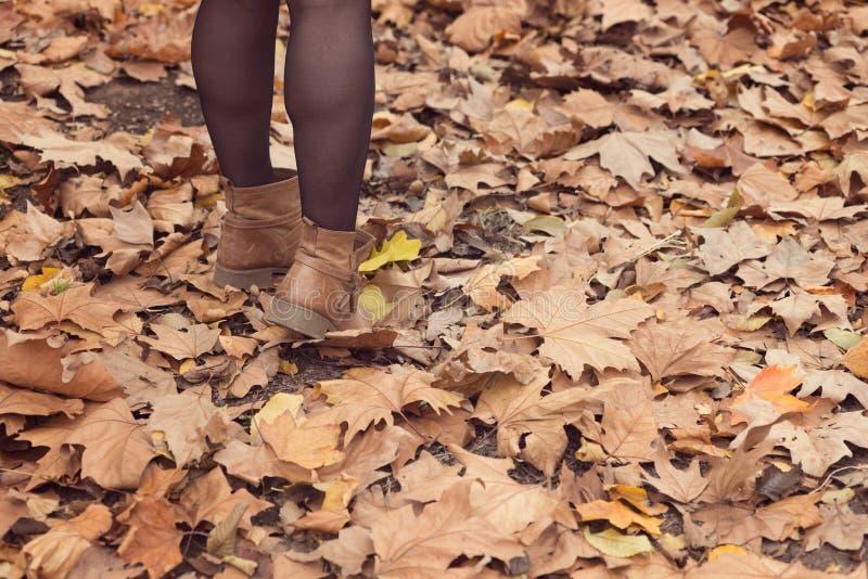 Download Lames au sol photo stock. Image du rester, automne, lames - 45363772