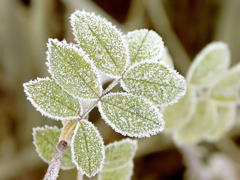 lames automnales de gel photo libre de droits