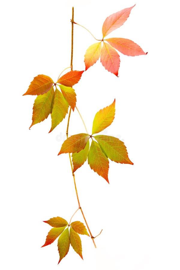 Lames colorées d'automne photographie stock libre de droits