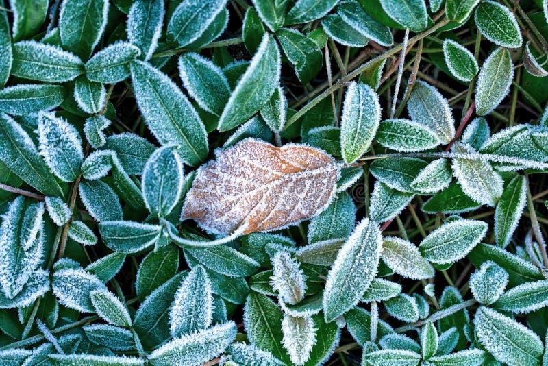 Lames couvertes de gelée image stock