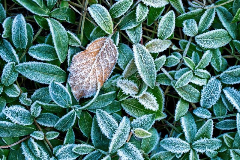 Lames couvertes de gelée photographie stock