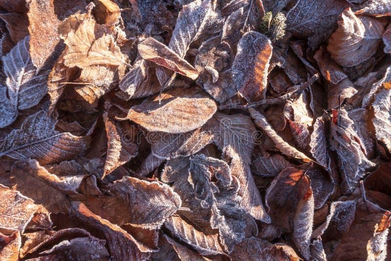 lames couvertes de gel photographie stock