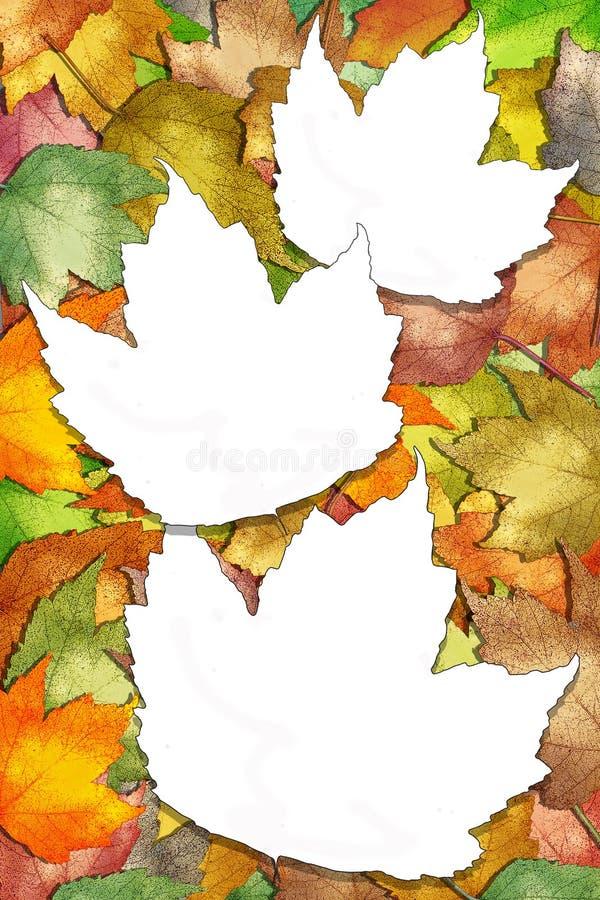 Lames d'érable d'automne avec les espaces blancs de lame photo stock