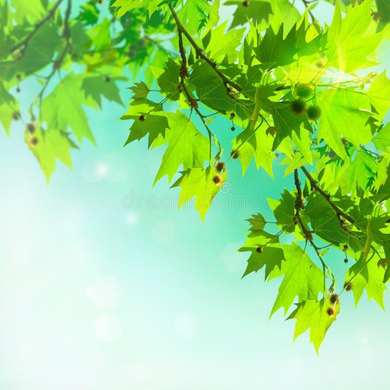 Lames d'arbre plat sur un fond abstrait images stock