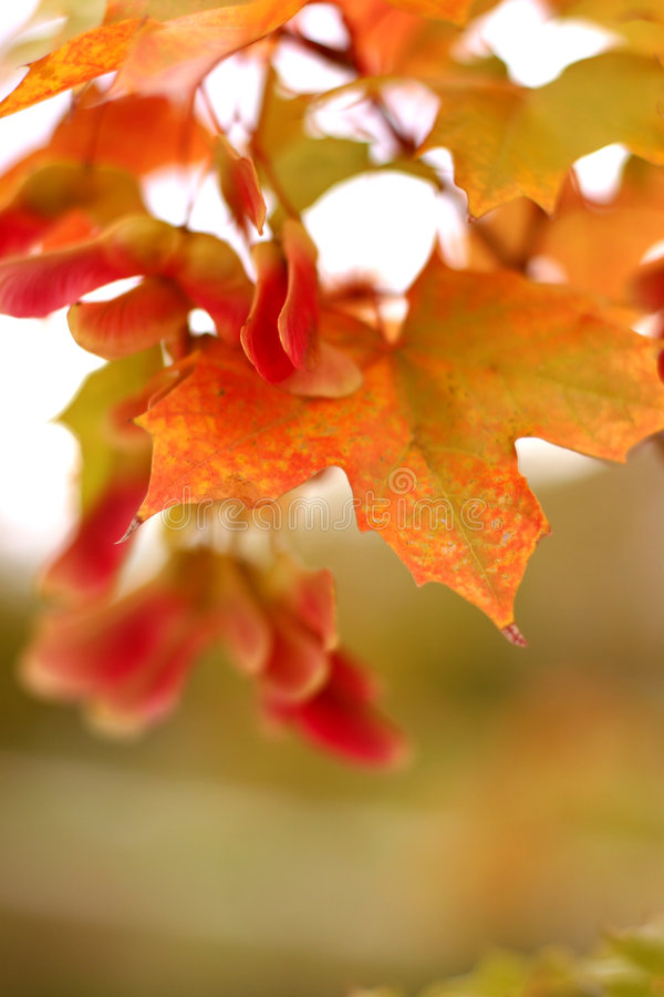 Lames d'automne image stock