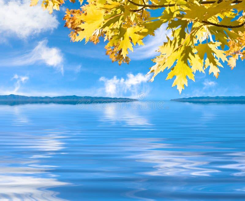 Lames d'automne au-dessus de l'eau images libres de droits