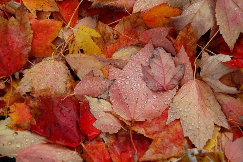 Lames d'automne avec des baisses de l'eau photographie stock libre de droits