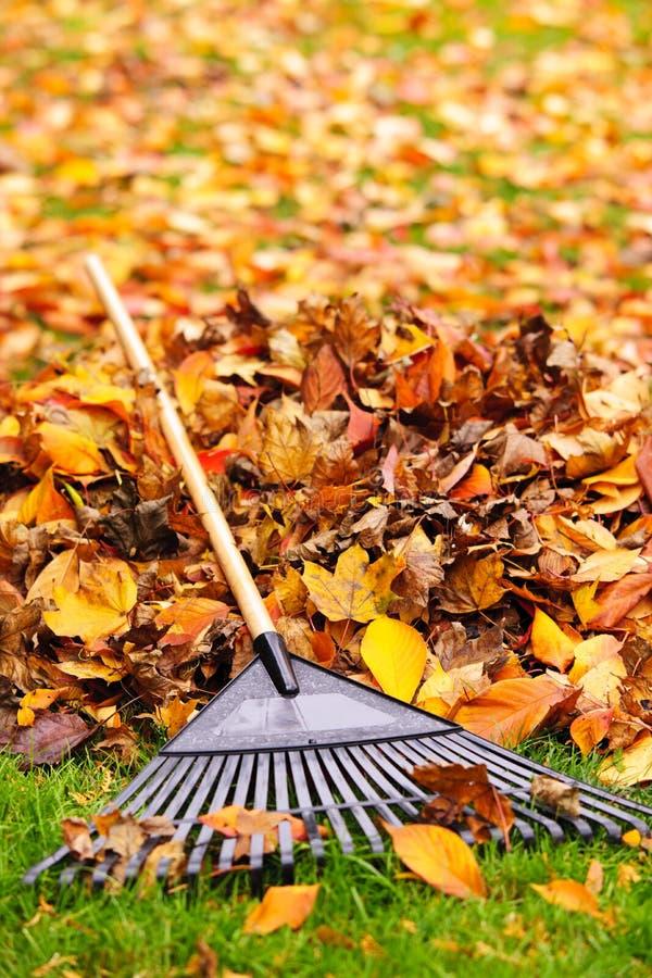 Lames d'automne avec le râteau photographie stock libre de droits