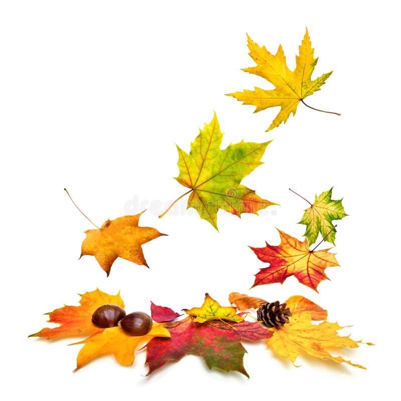 Lames d'automne colorées tombant vers le bas images stock