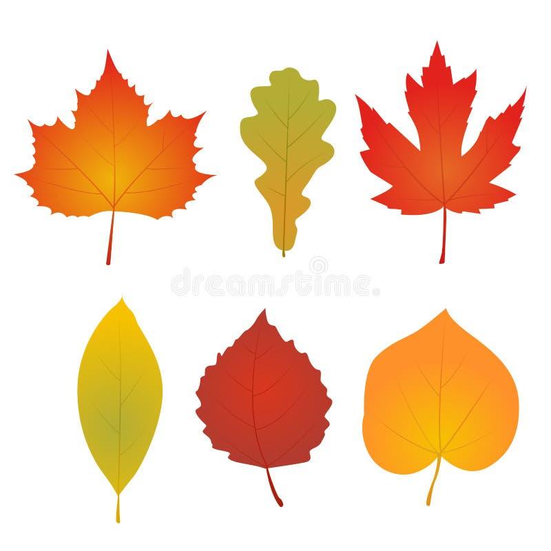 Download Lames D'automne D'isolement Illustration de Vecteur - Illustration du orange, flore: 77152829