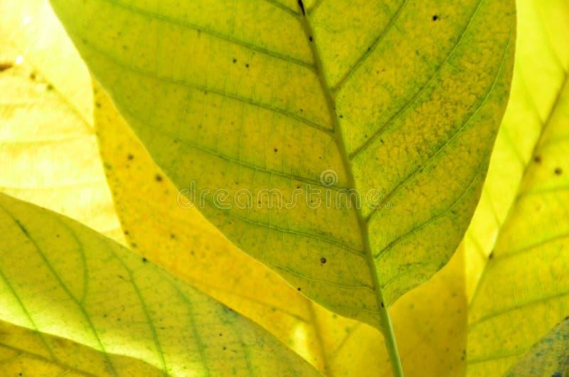Lames d'automne de noix photographie stock