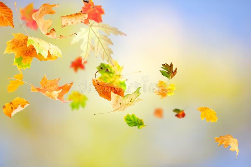Lames d'automne en baisse photographie stock libre de droits