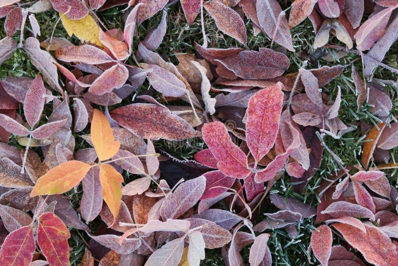 Lames d'automne figées photos stock