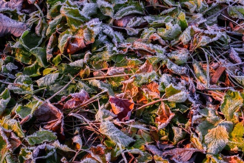 Lames d'automne figées photos libres de droits