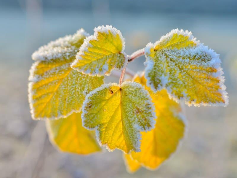 Lames d'automne figées photo stock