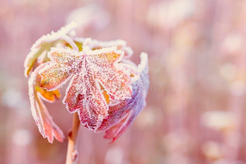 Lames d'automne figées photo libre de droits