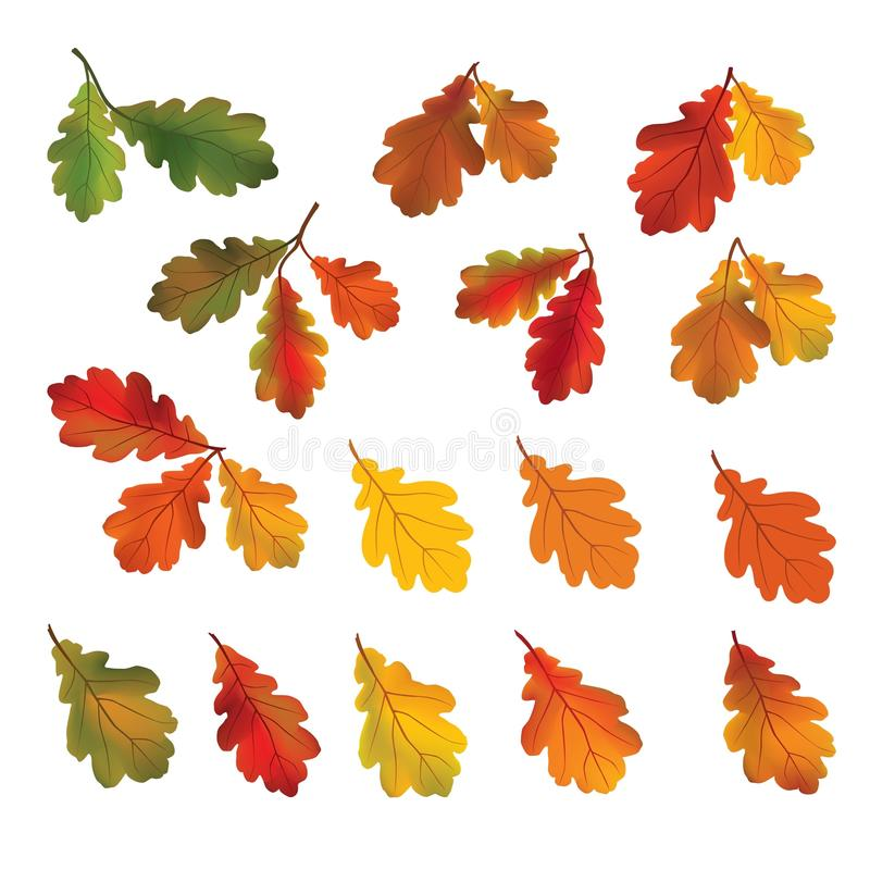 Lames d'automne d'isolement sur le fond blanc Icône de chute Nature De illustration libre de droits