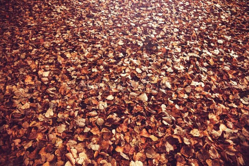 Lames d'automne jaunes lames défraîchies photos stock