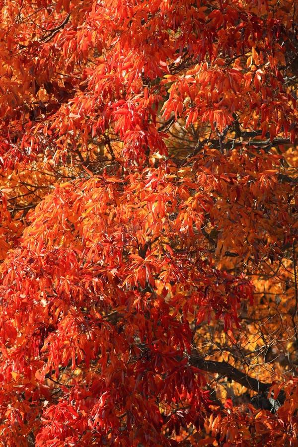 Lames d'automne lumineuses photos libres de droits