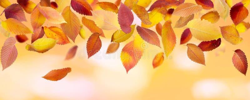 Lames d'automne panoramiques images stock