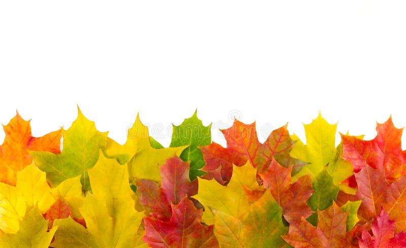 Lames d'automne pour un fond d'automne images libres de droits