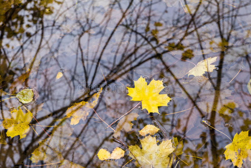 lames d'automne sur l'eau photos libres de droits