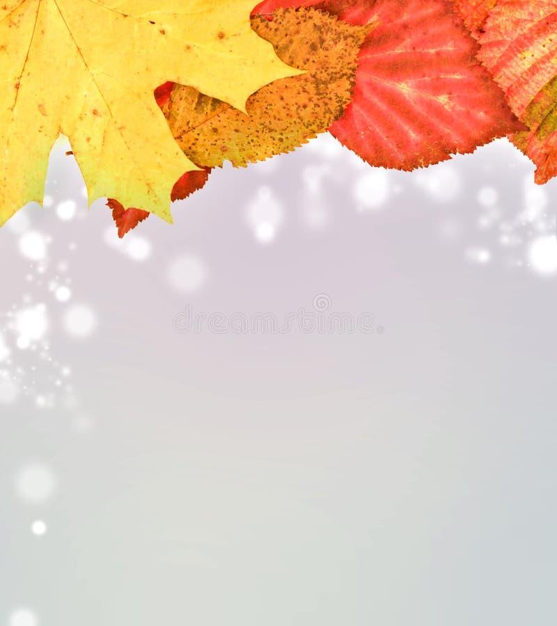 Lames d'automne sur le fond mou illustration de vecteur