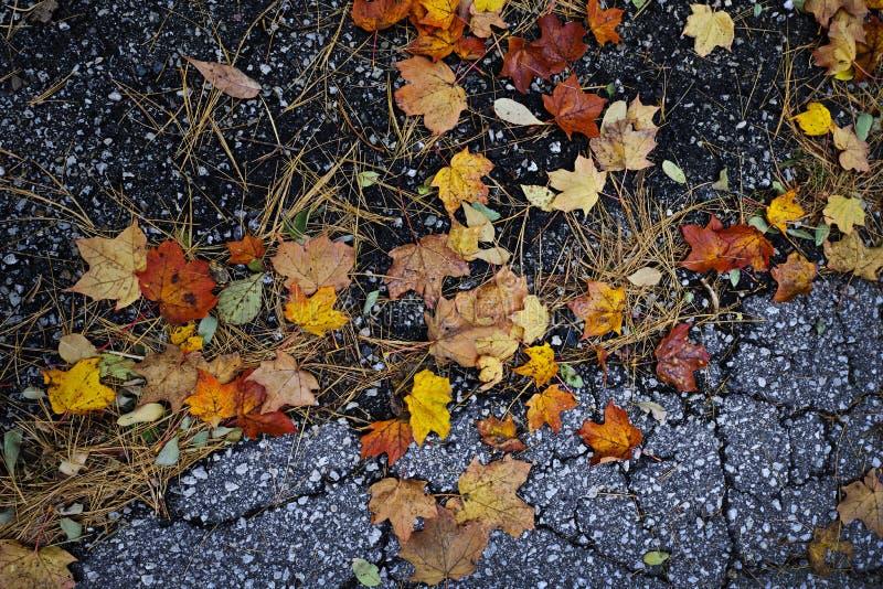 Lames d'automne sur le trottoir photo libre de droits