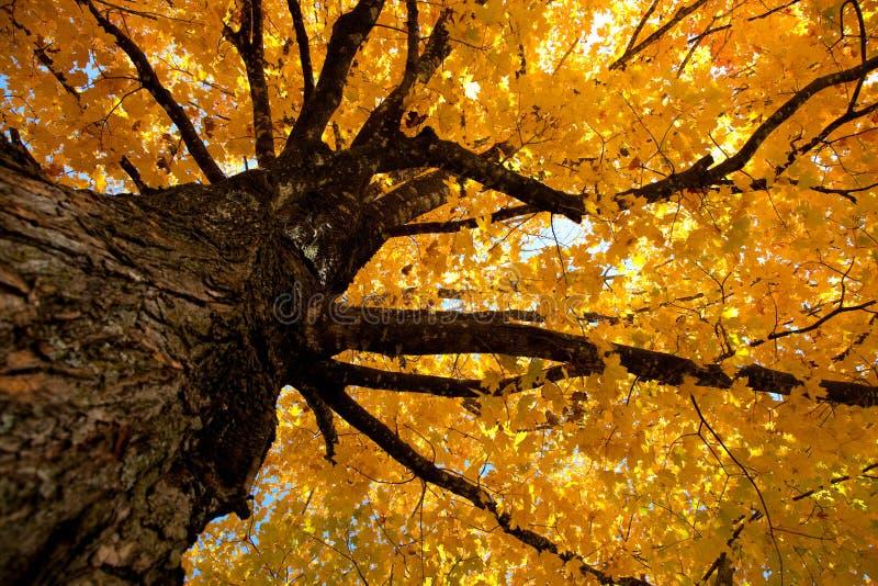 Lames d'automne sur un arbre images stock