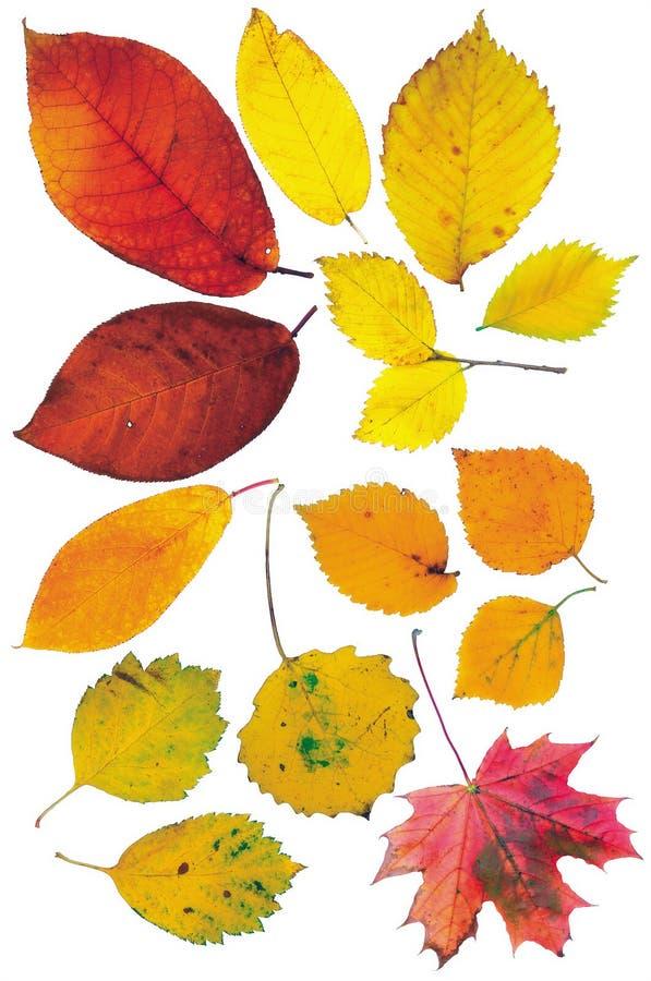 Lames d'automne sur un fond blanc photographie stock