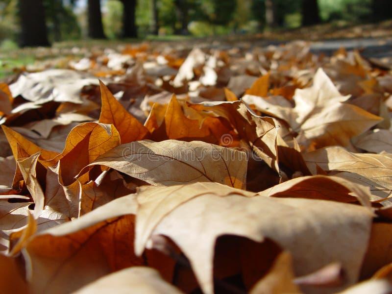 Lames d'automne tombées photo stock