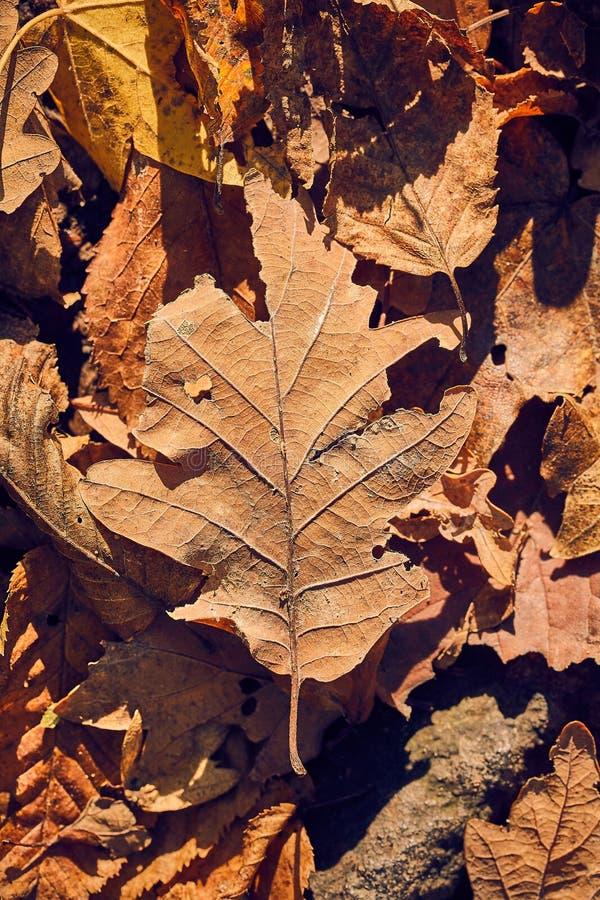 Lames d'automne tomb?es photos libres de droits