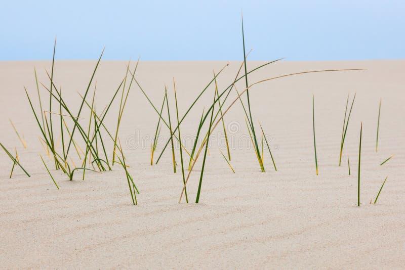 Lames d'herbe dans le sable photographie stock