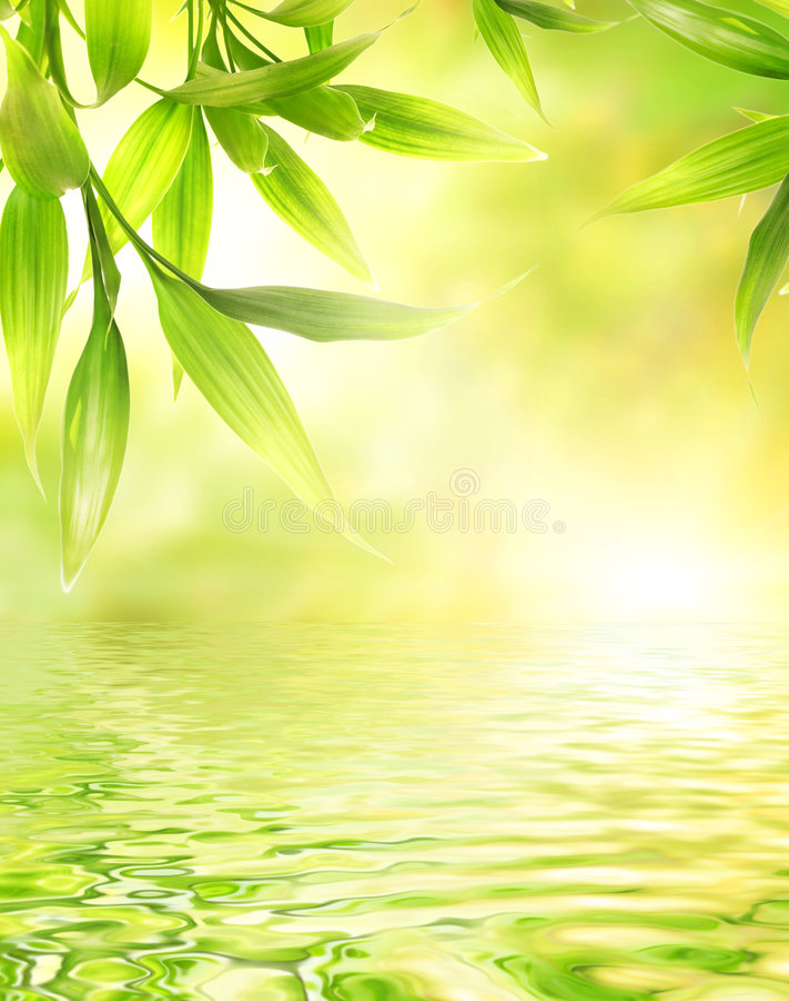 Lames de bambou photographie stock