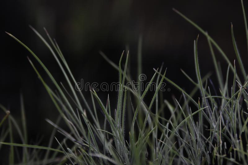 Lames de feuille d'herbe émergeant du bloc brûlé image stock
