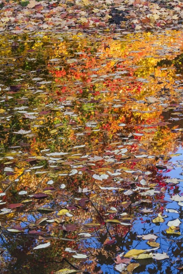 lames de flottement d'automne photo stock