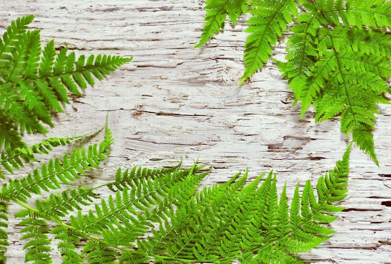 Lames de fougère sur le vieux bois photos libres de droits