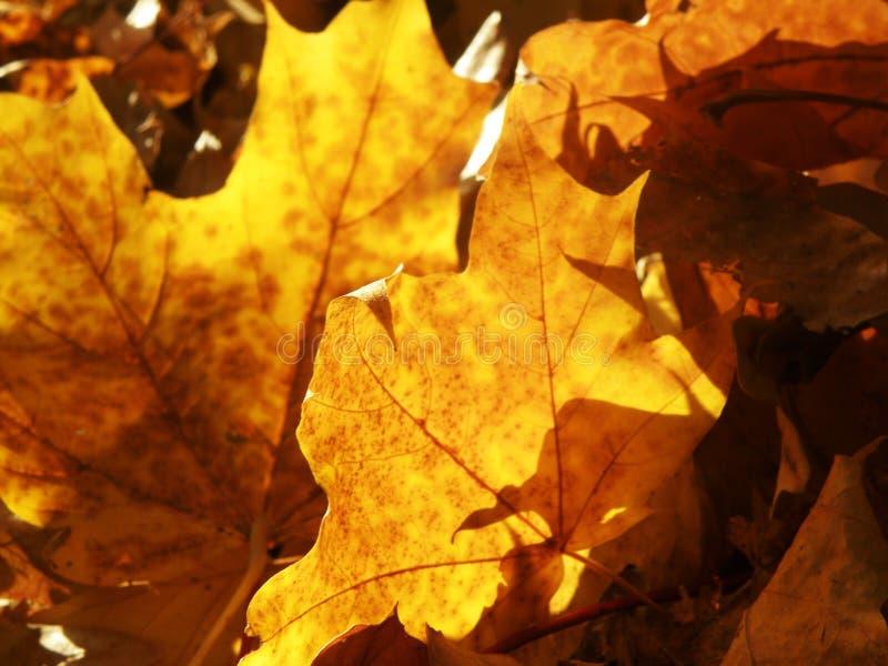 Lames de jaune d'automne photographie stock
