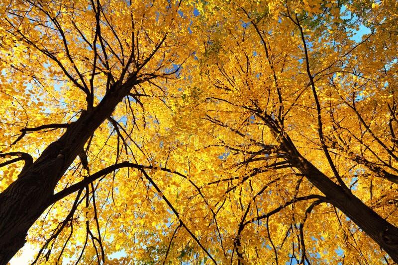 Lames de jaune d'automne sur des arbres photographie stock
