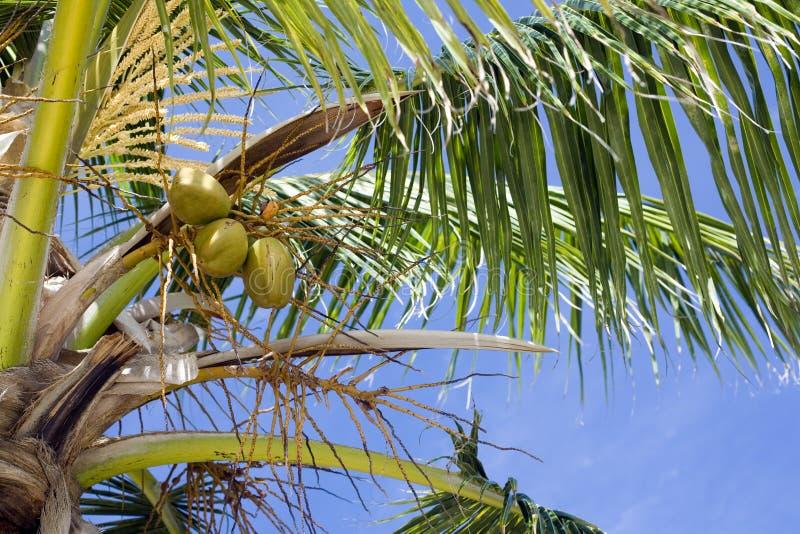 Lames de palmier photographie stock libre de droits