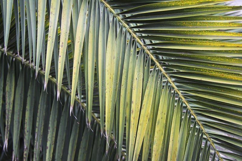 Lames de palmier photos stock