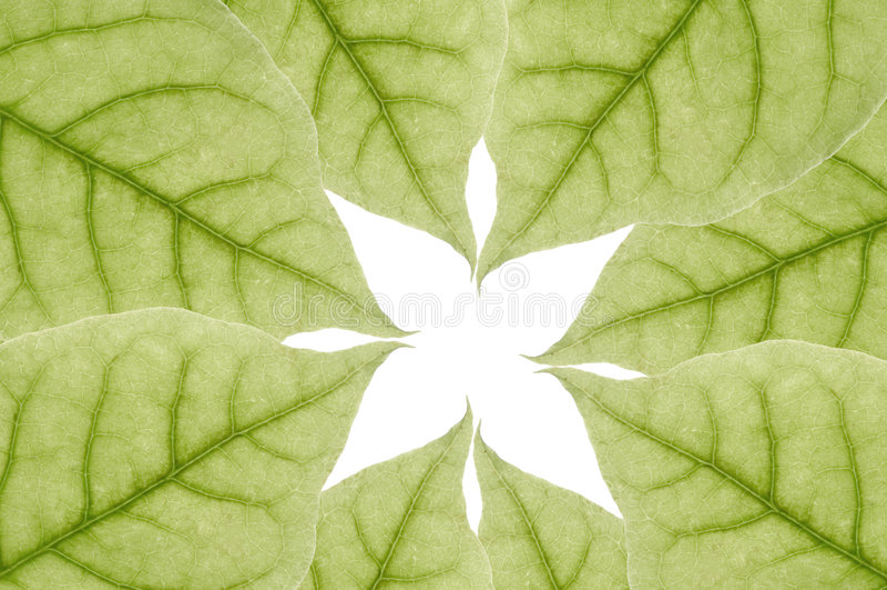 Lames de vert illustration libre de droits