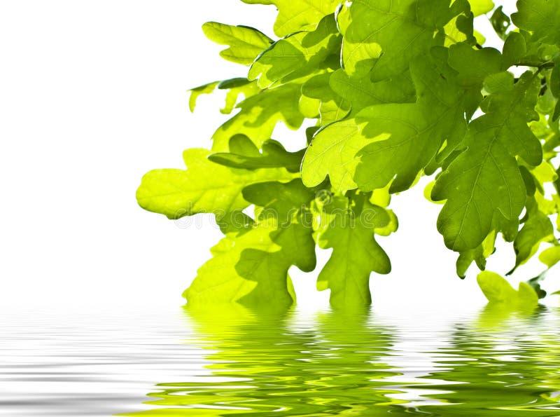 Lames de vert au-dessus de l'eau photo libre de droits